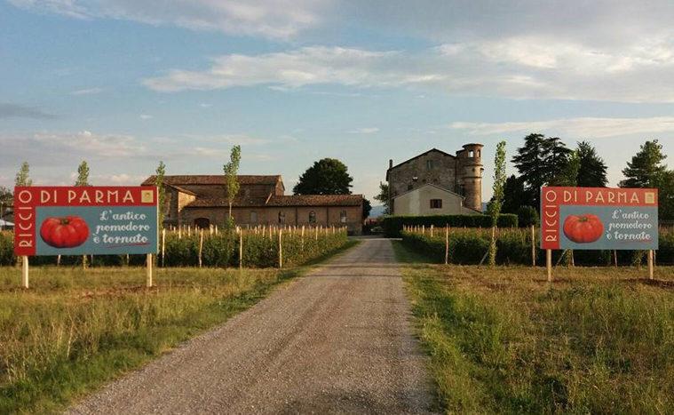 Festa dell'antico pomodoro Riccio di Parma (II edizione)